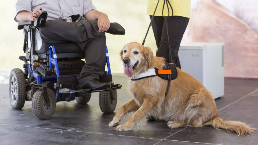 10 Best Pets for Wheelchair Users